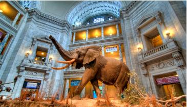 Washington DC - Smithsonian Museum