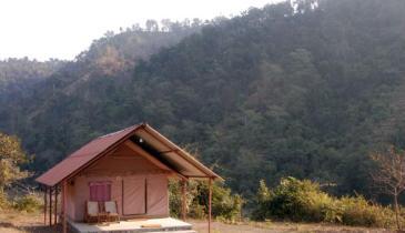 Forrest, Rajaji National Park
